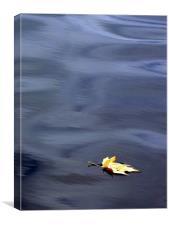 Leaf it alone....., Canvas Print