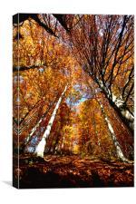 Autumn feelings, Canvas Print