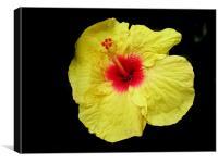 flower Jawa
