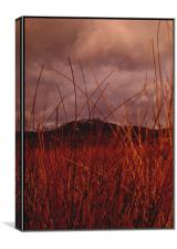 Machrie Moor, Canvas Print