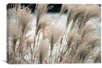 Straw in winter, Canvas Print