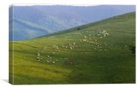 Shepard's mountain walk, Canvas Print