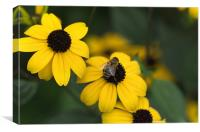 One bee over the flowers nest, Canvas Print