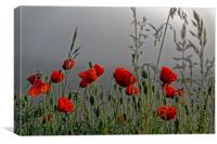 poppy field in the cold morning, Canvas Print