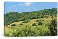 Gardening field near Orlat Sibiu county Romania