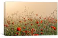 The field of poppies early morning, Canvas Print