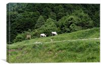 Two cows grazing on the edge of a mountain road, Canvas Print