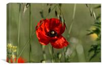Poppies guard, Canvas Print