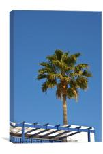 Rooftop Palm, Canvas Print