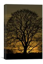Sycamore Sunset, Canvas Print