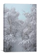 Snow Path, Canvas Print