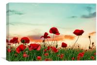 Poppy Field, Canvas Print