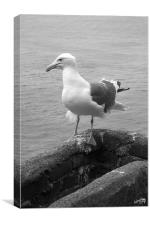 gull on point, Canvas Print