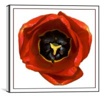 The Tulip, Canvas Print