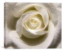 White Rose Light, Canvas Print