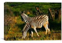 Zebra Twins, Canvas Print