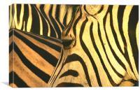 Zebra-eye, Canvas Print
