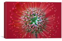 Protea, Canvas Print