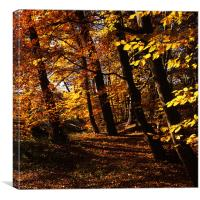 Natures Gold, Canvas Print