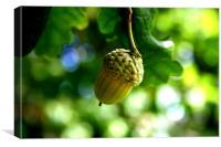 From little acorns grow mighty oaks, Canvas Print