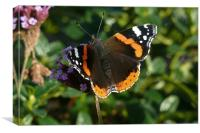 Red Admiral, Canvas Print