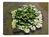 Water Flower, Canvas Print