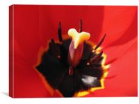 Extreme Tulip Closeup, Canvas Print
