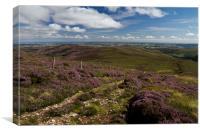 Heather in the Cheviots