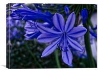 Subtle Blue Flower, Canvas Print