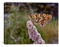 Colorful Butterfly, Canvas Print