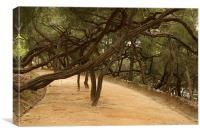 Strong Roots, Canvas Print