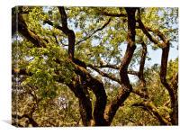 Crossing Trees, Canvas Print