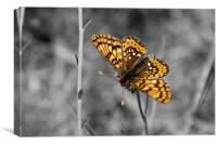 Selective Butterfly, Canvas Print