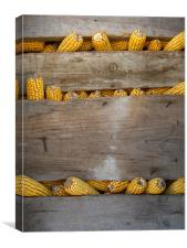 How many spikes?, Canvas Print