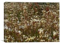 A field of flowers, Canvas Print