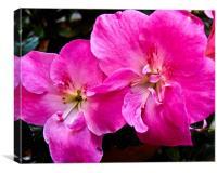 A pink flower, Canvas Print