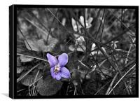 Violet, Canvas Print