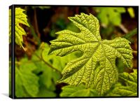 Leaf , Canvas Print