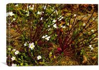 Flora , Canvas Print
