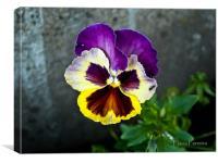 A little flower, Canvas Print