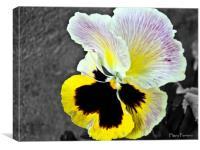 Flower of love, Canvas Print