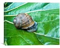A snail, Canvas Print