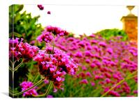 Pretty Pink Flowers, Canvas Print