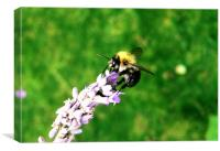 Lavender Bee, Canvas Print