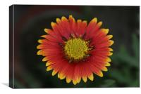 blooming flora , Canvas Print
