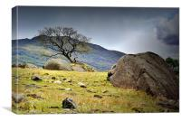 Rock and Tree,Seathwaite.