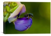 Wild bee on a flower