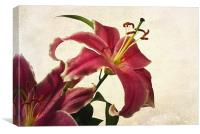 Pink Lilies, Canvas Print