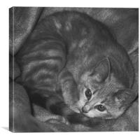 Little Cat, Canvas Print