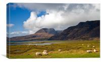 Grazing Sheep by Loch Torridon, Canvas Print